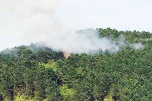 Beykoz Göksu Ormanı'nda yangın